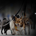 Charity Dog Walk Highlights Saturday Morning Kids Activities
